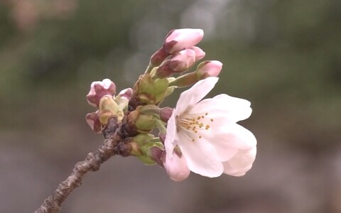 Kirsiõis.