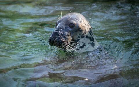 День тюленя в Таллиннском зоопарке