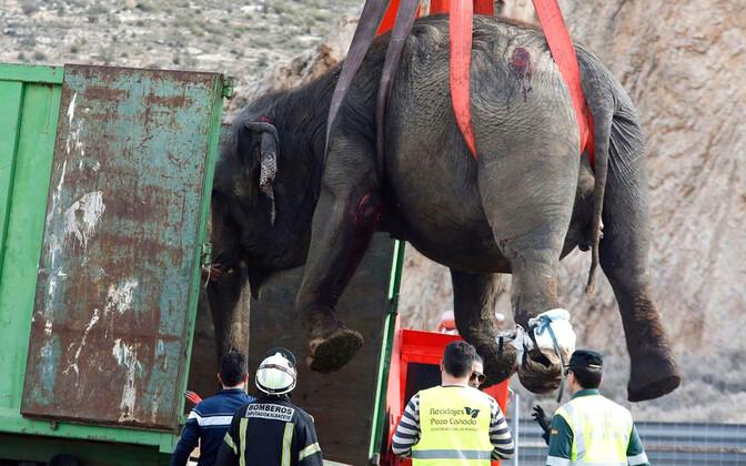 Власти вызвали подъемный край, чтобы поднять животных с проезжей части.