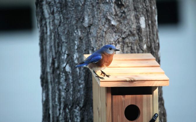 Pesakasti päikese kätte asetamine teeb lindudele rohkem kahju kui kasu.
