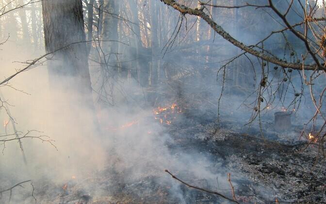 Поджигание прошлогодней травы очень опасно и запрещено законом по всей территории Эстонии.