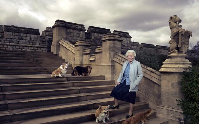 Elizabeth II Windsori lossi trepil oma koerte (ülalt) Willow', Vulcani, Candy ja Hollyga 2016. aastal.