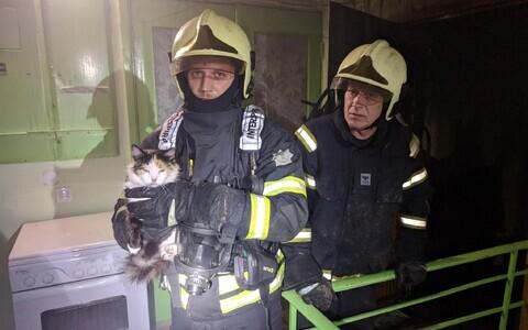 Спасатели и кошка.