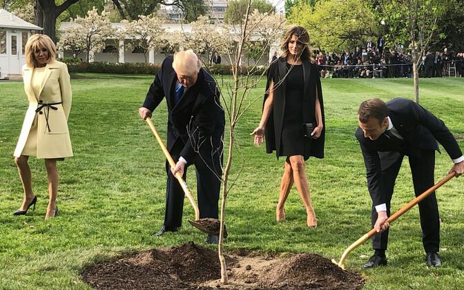 Prantsusmaa ja USA president 23. aprillil Valge Maja aeda puud istutamas.