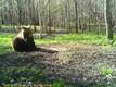 Saaremaa isakaru