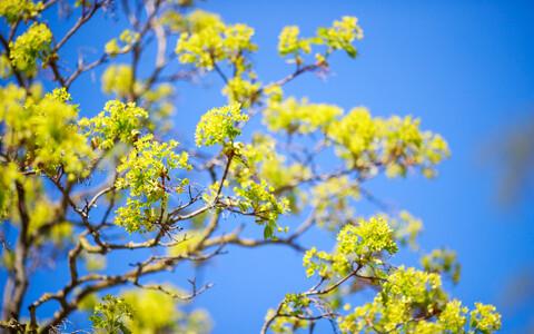 Kevad.