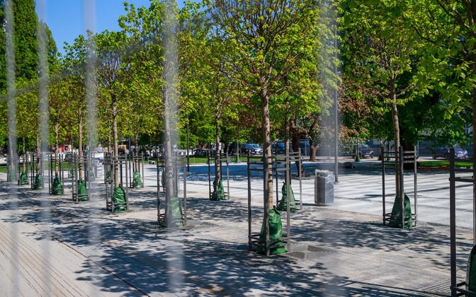 Парк Таммсааре в Таллинне, где любит собираться молодежь.