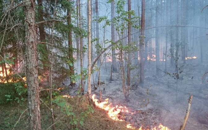 Wildfire in Kuningaküla, Ida-Viru County.