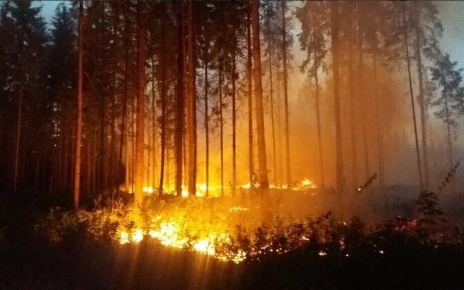A wildfire in Estonia. Photo is illustrative.