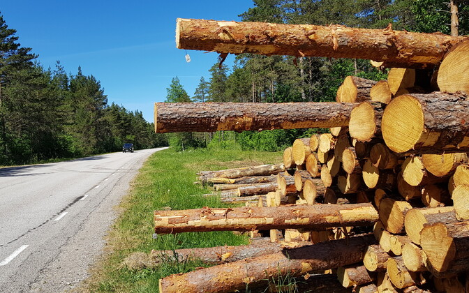 Logs stacked on the side of the road.