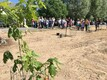 Viljandimaal Suure-Jaanis avati Nooruse tammik