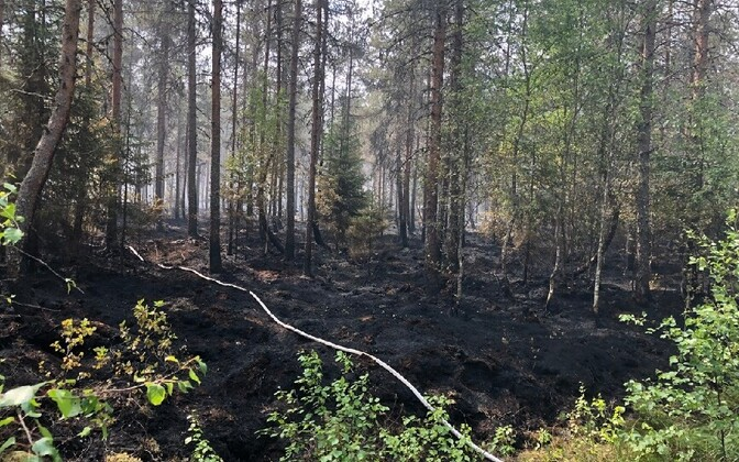 A burned patch of woods in the village of Vikipalu in Harju County's Anija Municipality. June 2018.