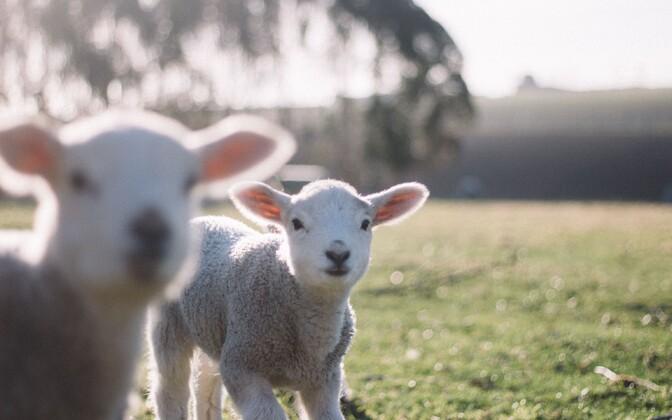 Teaduspõhiselt saab loomade kannatusi tõhusamalt leevendada.