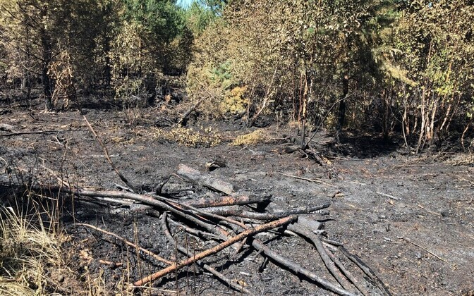 Burned patch of forest in Vikipalu, 13 June 2018.