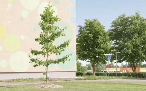 Üle Eesti sirguvad korteriühistute tammed