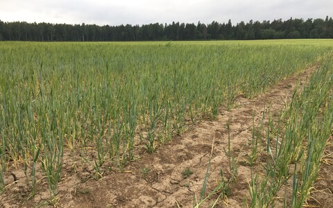 Dried-out fields are rampant in Estonia as unusually hot and dry conditions persist.