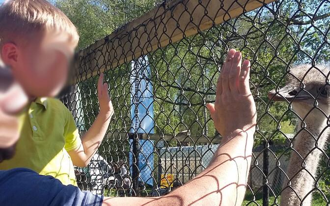 Nelja-aastane Martin (nimi muudetud) on turvakodus elanud juba üle aasta, ehkki tal on olemas tädi pere, kes soovib talle kodu pakkuda. Kohtuvaidlus eestkoste üle alles käib, ent poiss on nüüdseks aasta jooksul juba kolmandasse turvakodusse solgutatud.