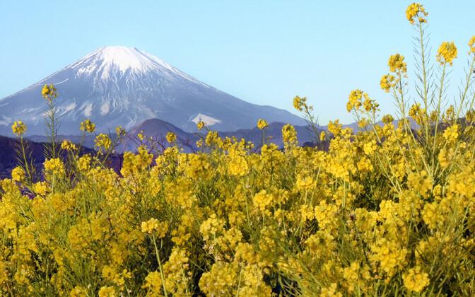Fuji mägi