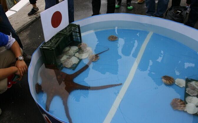 Rabio-nimeline kaheksajalg ennustas õigesti kõik Jaapani koondise mängude tulemused.