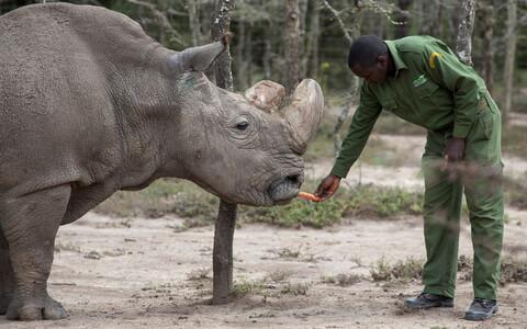 Märtsis surnud viimane isane põhja valge-ninasarvik Sudan.