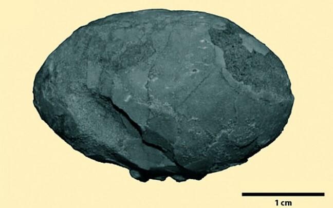 Mesosoikumiaegne Brasiiliast leitud kivistunud linnumuna on väiksem, kui võiks eeldada linnufossiilide luude põhjal