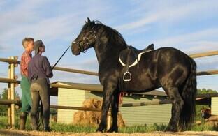 75e709ff08f Toris selgitati välja parimad eesti tõugu hobused   Eesti   ERR