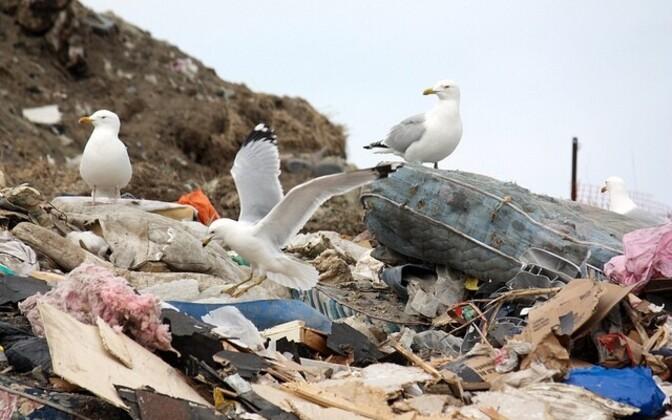 Две из трех попавших под уголовное преследование фирм занимаются вывозом и утилизацией мусора.