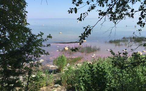 Цвет водорослей на пляже зависит от степени их разложения.