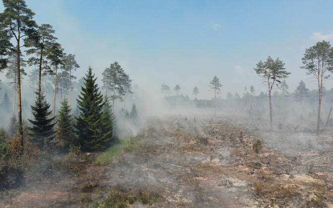 Wildfire in Konju, Ida-Viru County.