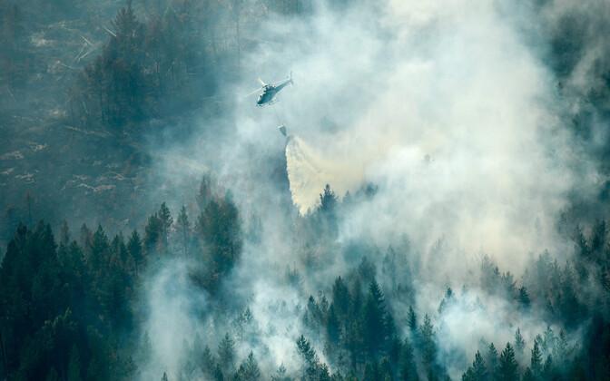 Helikopter Rootsis metsapõlengut kustutamas.