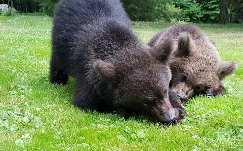 Karupojad Saaremaal
