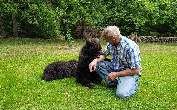 Bear cubs which appeared in a Saaremaa backyard on Friday.