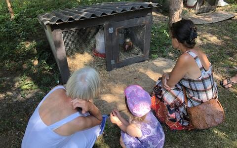 День хуторов в парке Ристи.