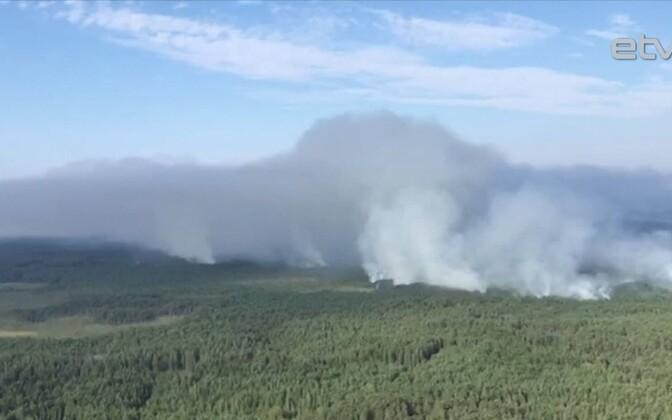 Лесной пожар в Латвии продолжается уже неделю.