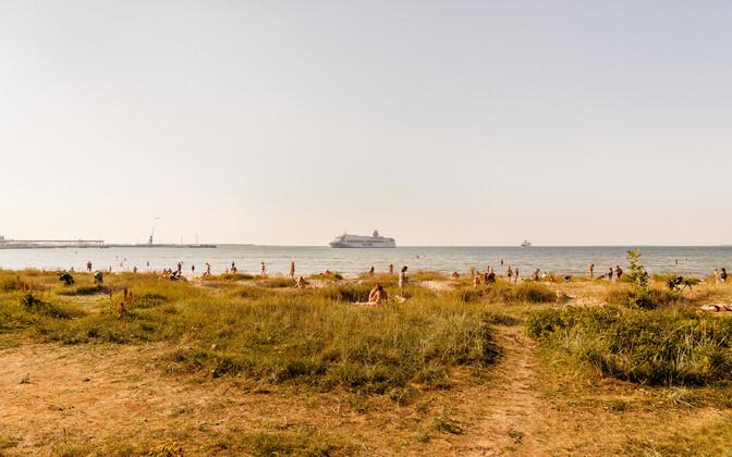 Sunbathers along Tallinn Bay.