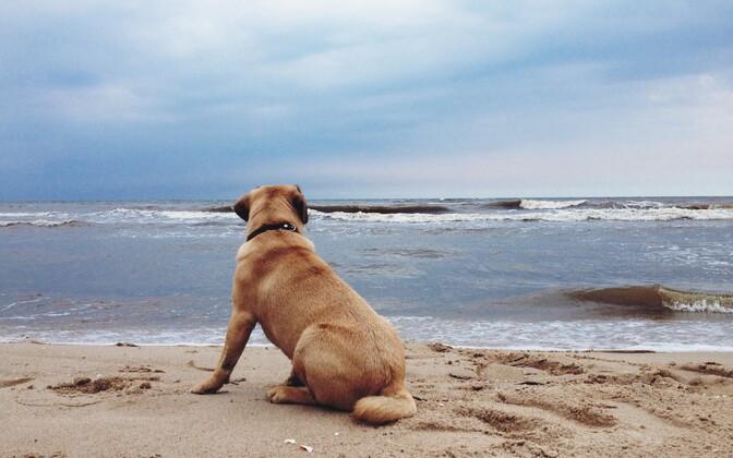 В пятницу на столичных пляжах вода станет на 10 градусов теплее.