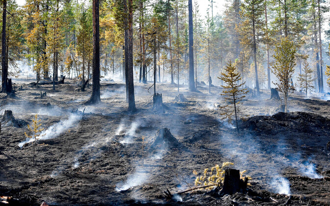 Metsapõleng Rootsis.