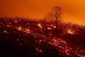 Калифорния охвачена лесными пожарами.