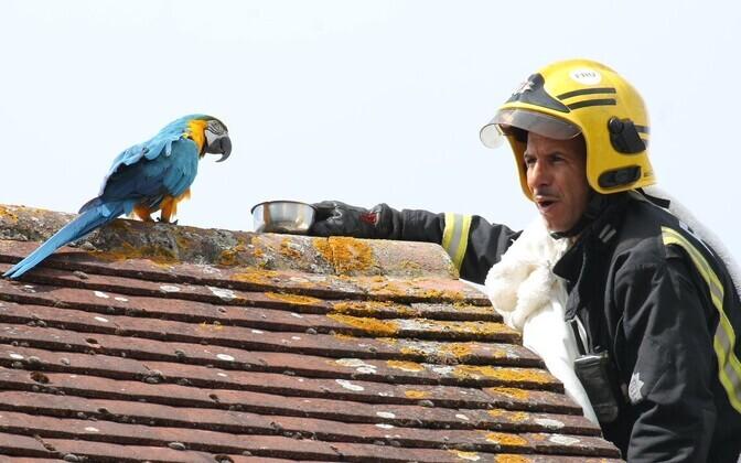 papagoi Jessie ja Londoni tuletõrjuja.