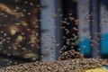 в Нью-Йорке из-за пчел перекрыли Таймс-сквер.