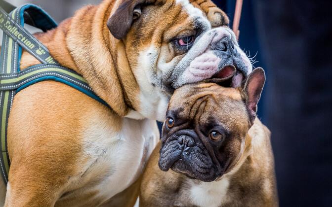 Insta-koerad Kalamajas