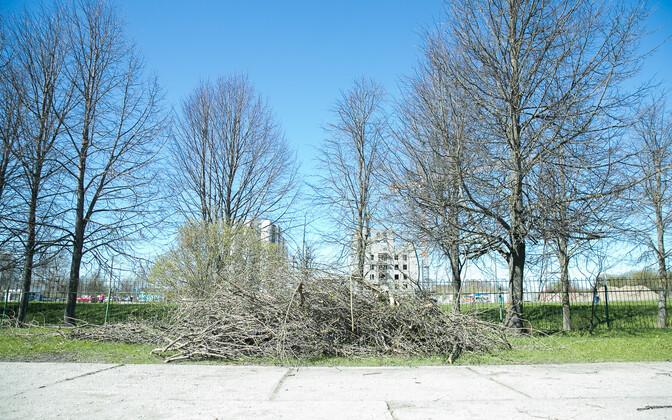 . Финансируются такие работы, как рубка и обрезка деревьев, подготовка клумб к весне и т.д.