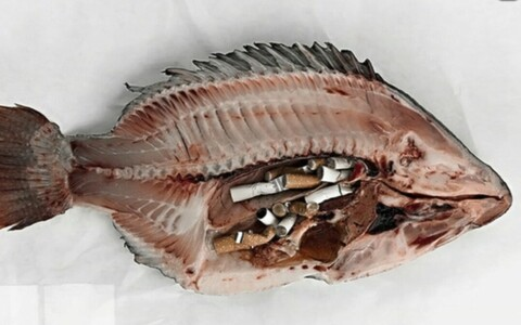 Sigaretikonid kala kõhus.
