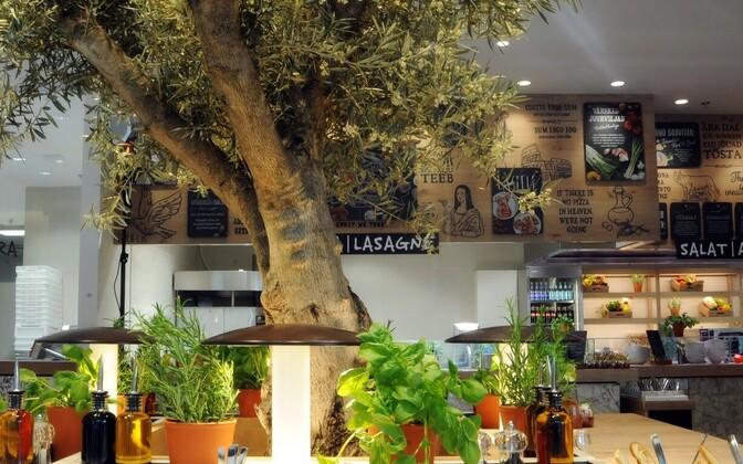 Символ Vapiano – оливковое дерево.