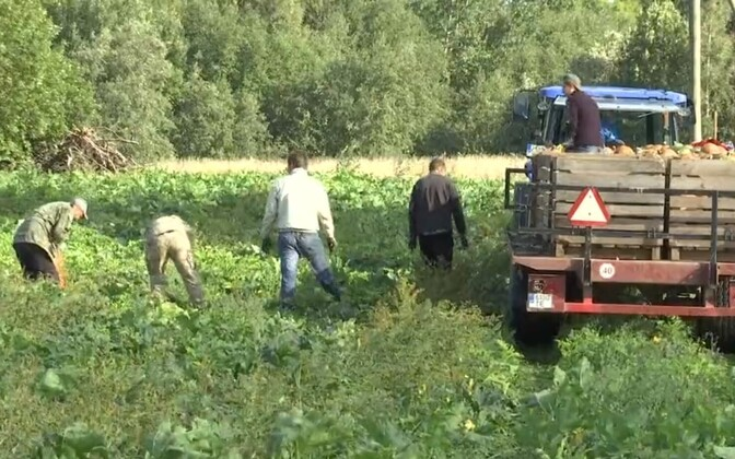 Foreign workers in Võru County.