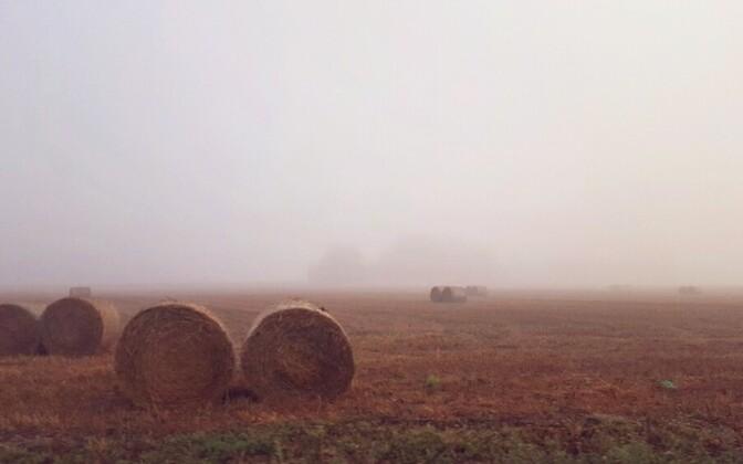 Осенние фотографии читателей ERR