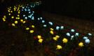 Valgus Kõnnib Kadriorus