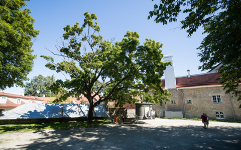 Епископский сад до реконструкции.