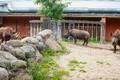 День носорога в Таллиннском зоопарке.