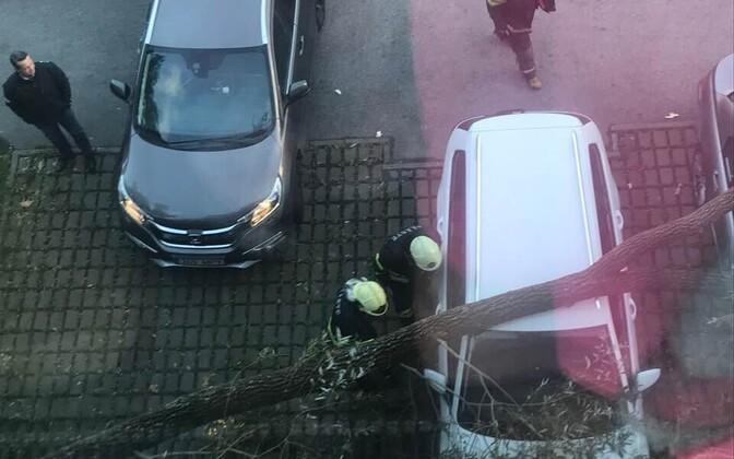 Упавшее на автомобили в Кадриорге дерево.